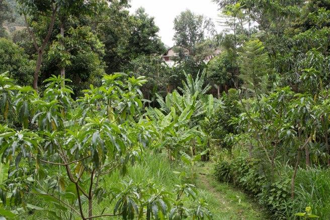 Ville d'Arusha, Tanzanie - Afrique