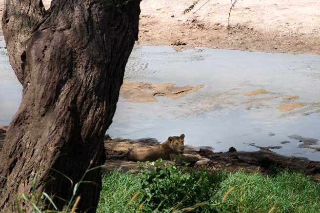 City guide - Tarangire national park, Tanzania