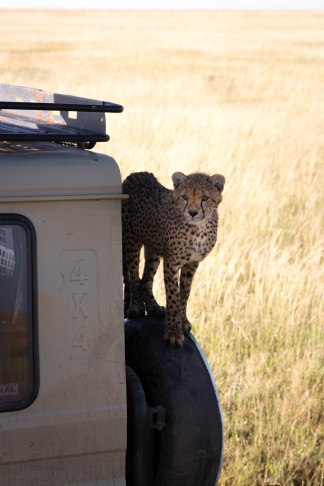 City guide - Serengeti National Park, Tanzania