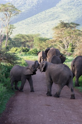 City guide - Serengeti National Park, Ngorongoro conservation area, Tanzania