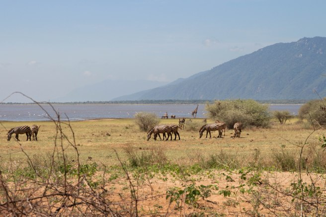 City guide - Lake Manyara National Park, Tanzania