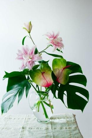 Plantes exotiques photography - portfolio madamcadamia